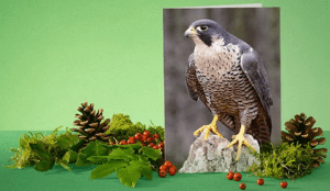 julgåva naturskydda ren miljö